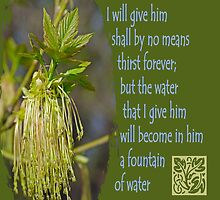 Fountain Springing Up Eternal Life ~ John 4:14 by Robin Clifton