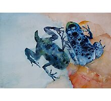The Multiple Lives of Frogs Photographic Print