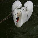 love bird by Profo Folia
