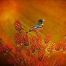 Baltimore Oriole  by swaby