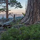 Pines of Emerald Bay by Richard Thelen