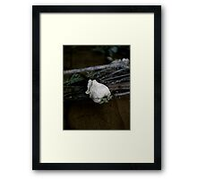 Dried Flowers in darkness  Framed Print