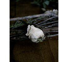 Dried Flowers in darkness  Photographic Print