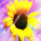 sunflower power-ipad by angeldragon069