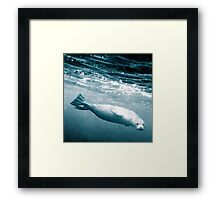 Seal Below the Surf Framed Print