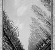 Instant Poplar Trees by M. van Oostrum