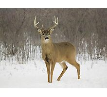 Buck Photographic Print