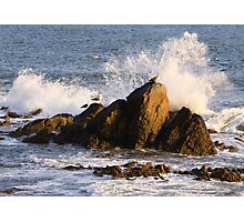 Seagull on the rock at rise Photographic Print
