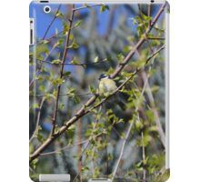 Great Tit iPad Case/Skin