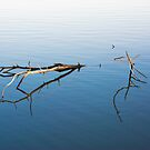 Branch in the Water by Reese Ferrier