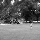 """down at the park"" (black and white) by angeldragon069"
