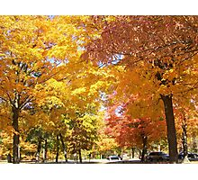 Under A Colorful Canopy Photographic Print