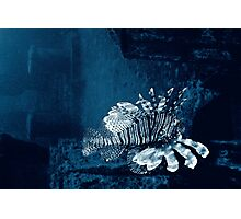 Lionfish Shipwreck Photographic Print