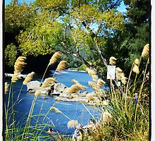 river in murchison by TamsinRees123