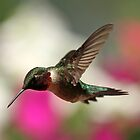 Spring Hummingbird... by Gregg Williams