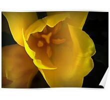 The Translucency of Tulips Poster