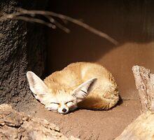 Fennec Fox by labiosa