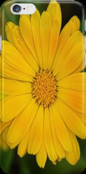 Yellow by crazykiwi