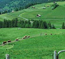 Perfectly Green, Switzerland by Emily McAuliffe