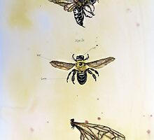 The life of bees by Jenny Wood