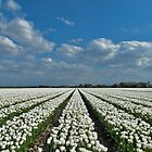 Tulipmania in Holland 4 by Adri  Padmos