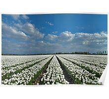 Tulipmania in Holland 4 Poster