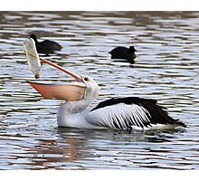 There Has To Be ONE Last Drop  ~ Pelican ~ Photographic Print
