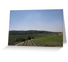 Israel, Vineyard Greeting Card