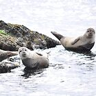 Seals  by pater54