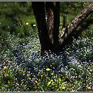 Dance of the Bluets by Wayne King
