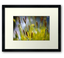 Yellow Grass with Water Highlights Framed Print