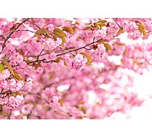 Blossom archway Photographic Print