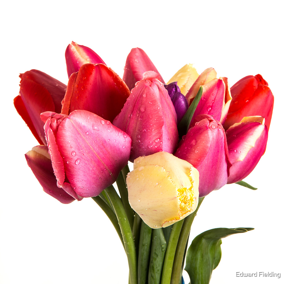Beautiful Fresh Spring Tulips by Edward Fielding