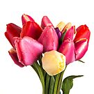 Beautiful Fresh Spring Tulips by Edward Fielding