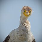 Cormorant Staring at me by TJ Baccari Photography
