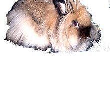 Cute lionhead rabbit by linwatchorn