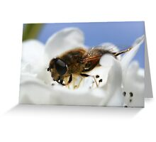 Save our bees Greeting Card