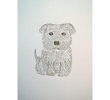 Tiny Terrier Photographic Print