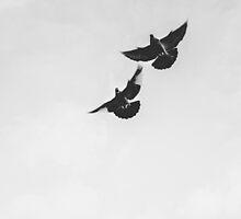 Kelham Island Pigeons At Dawn by Arran Cross