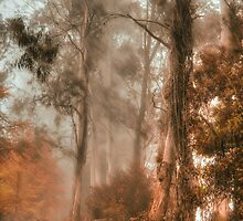 Guardians In The Mist  - Mount Wilson - NSW  - The HDR Experience by Philip Johnson