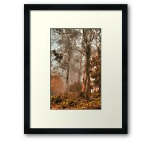 Guardians In The Mist  - Mount Wilson - NSW  - The HDR Experience Framed Print