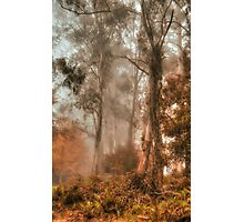 Guardians In The Mist  - Mount Wilson - NSW  - The HDR Experience Photographic Print