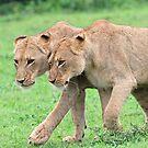 Sisterly affection! by jozi1