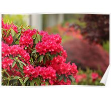 Gardening in Red Poster