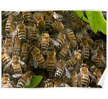 Honey Bee Swarm up close Poster