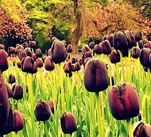 Tulips in the Park by Chris Goodwin