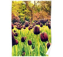 Tulips in the Park Poster