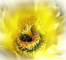 Cactus Glory by Ellen Cotton