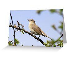 Gardn Warbler Greeting Card