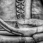 Buddha Hand by Adrian Evans